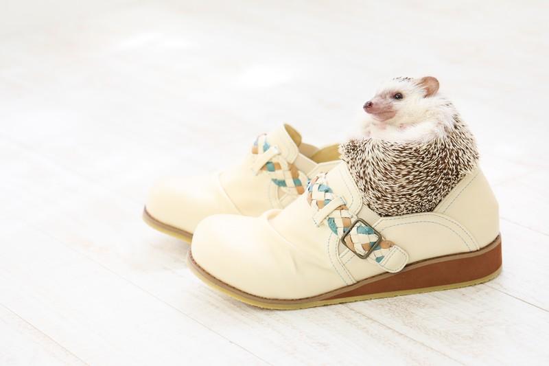 靴屋・シューズ・クツ