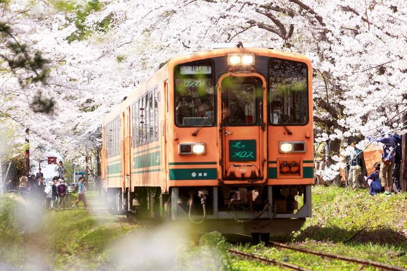 在来線・電車・桜トンネルとローカル線